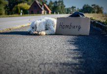 Krúttlegur hundur húkkar sér far til Hamburg