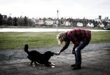 Leikið við stórglæsilegan hund